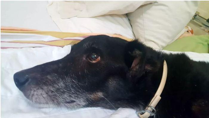 Concessionária de energia condenada por morte de animal
